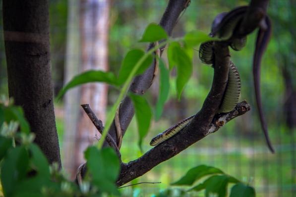 Snake (not part of exhibit)